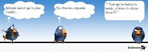 birds, meteo, pluie, hollande,