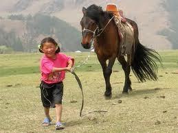 ob_030eec_chevaux-mmongolie.jpg
