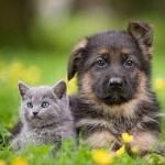 chat et chien.Jpeg